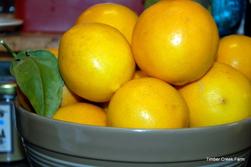 Lemon Extract from Timber Creek Farm