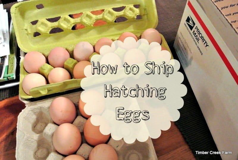 Timber Creek Farm How to Ship Eggs