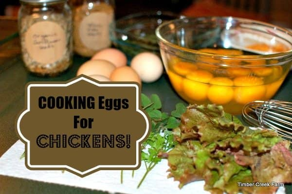 Cooking Eggs for Chickens