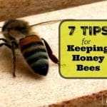 Best Tips For Keeping a Honey Bee Hive