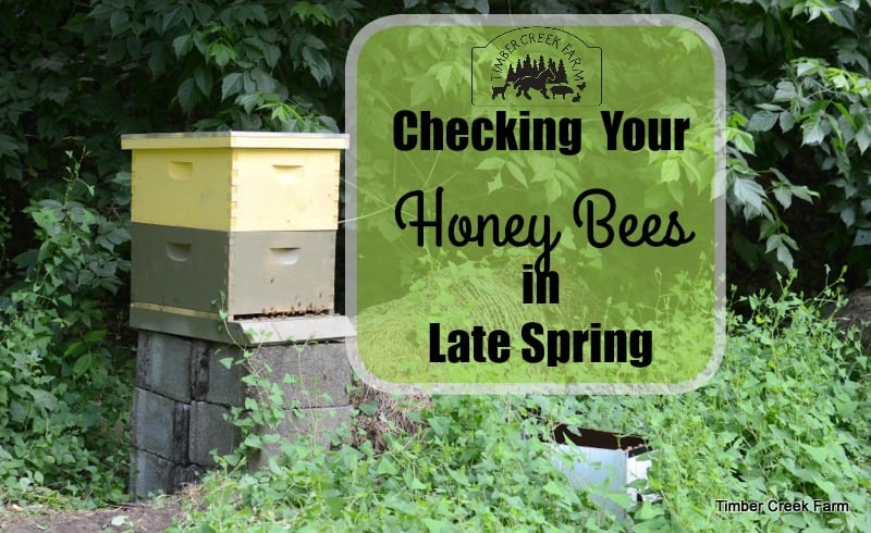 honey bees in late spring
