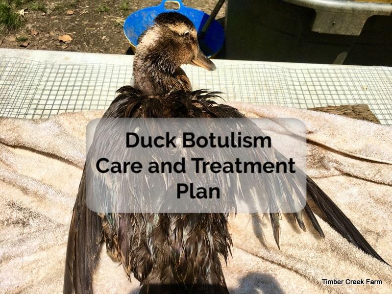 duck botulism treatment