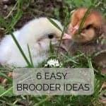 6 Easy Brooder Ideas to Start Chicks