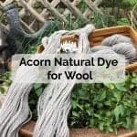 Acorn Natural Dye for Wool - Fall Dye Projects