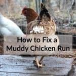 How to Fix a Muddy Chicken Run