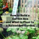 How to Build a Garden Box and What to Grow in it.