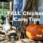 Fall Chicken Care Tips For a Healthy Flock
